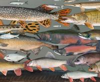 R_2q3IDB3fS5J0inV~fishes_of_wi_clip_200x200